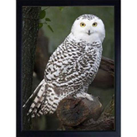 SNOW OWL 3D FRIDGE MAGNET